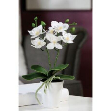 cserepes-feher-orchidea.jpgjpg