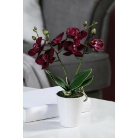 cserepes-lilas-orchidea
