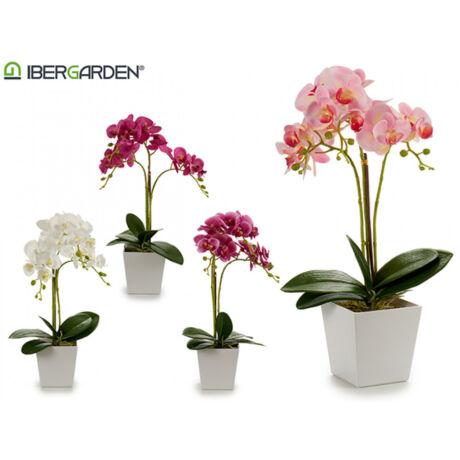 cserepes-fukszia-orchidea.jpg